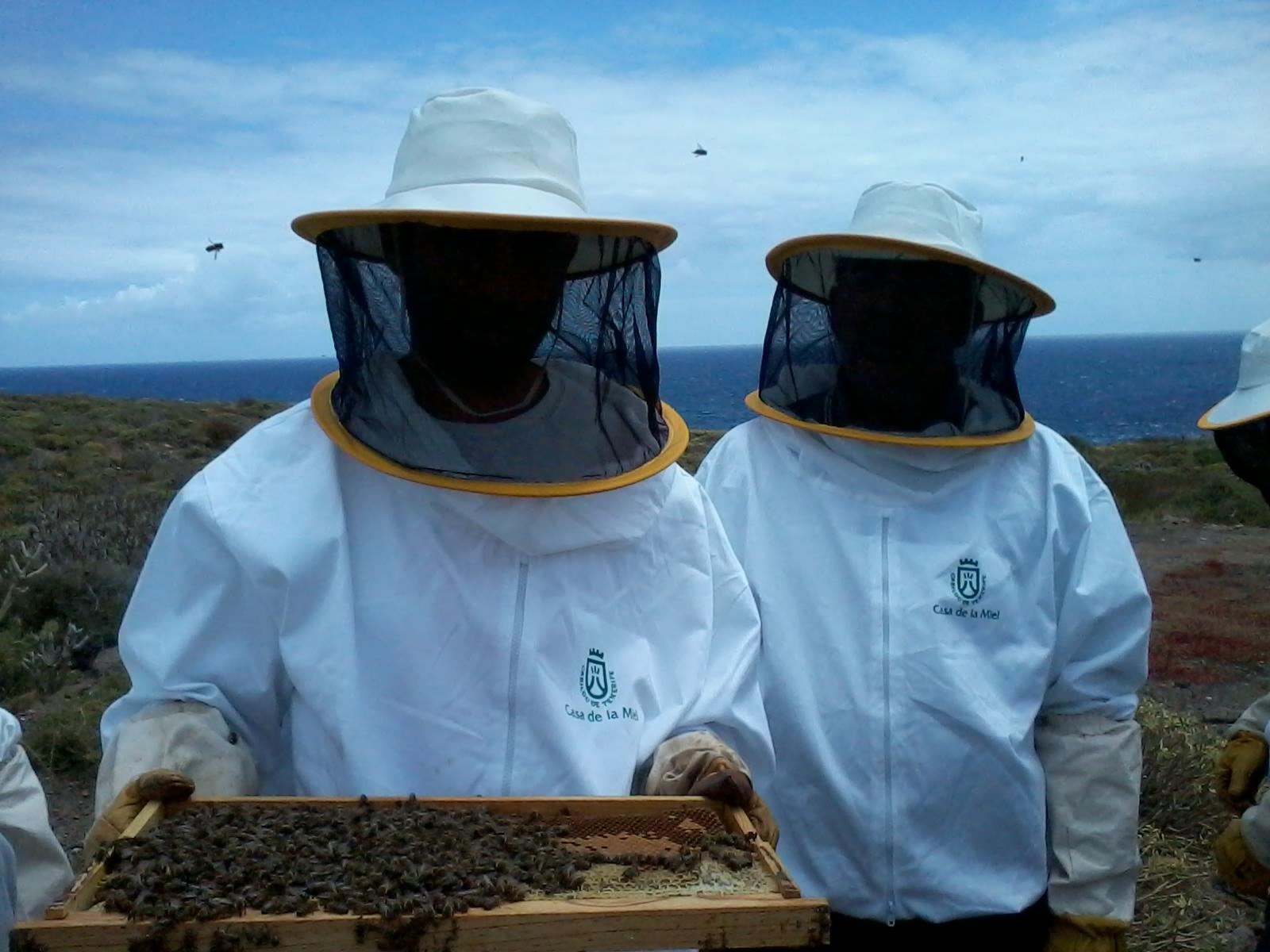 IES DAUTE, Apicultura en Tenerife