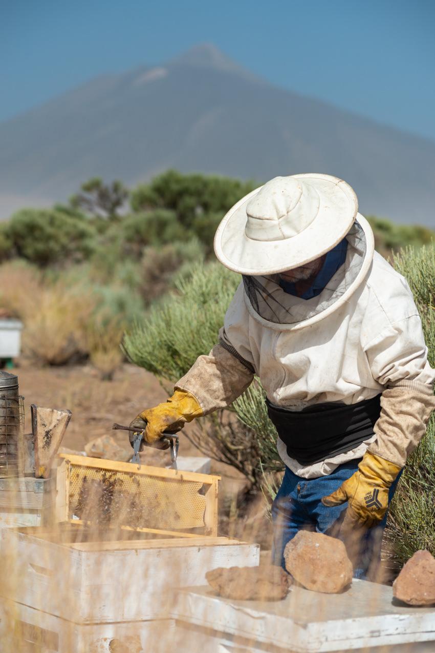 Apicultura en Las Cañadas del Teide