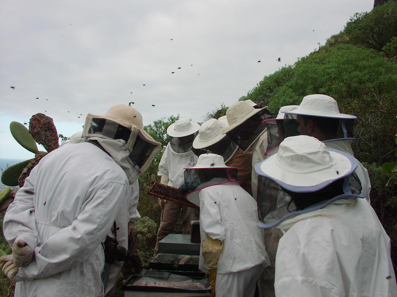 Curso de apicultura en Tenerife