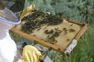 miel de tenerife, casa de la miel